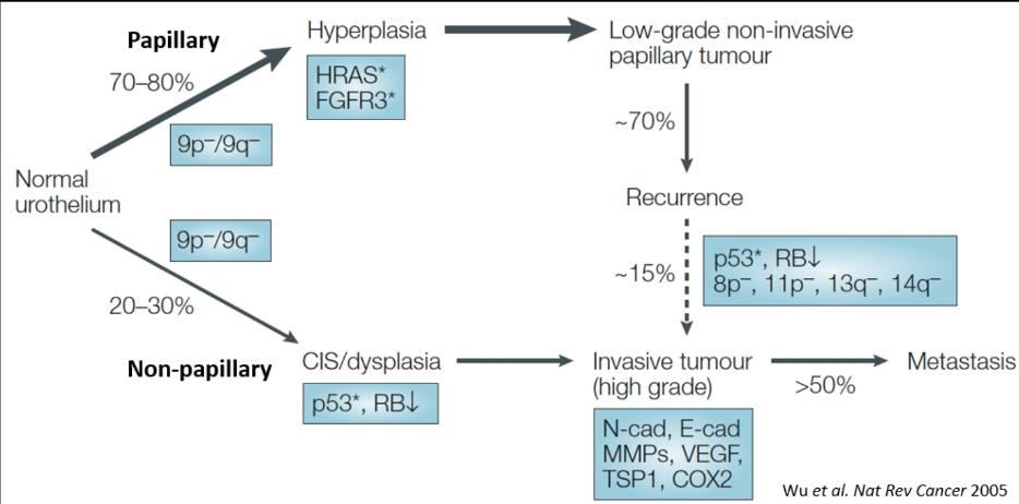 modul în care se formează papilomele hpv lingua sintomi