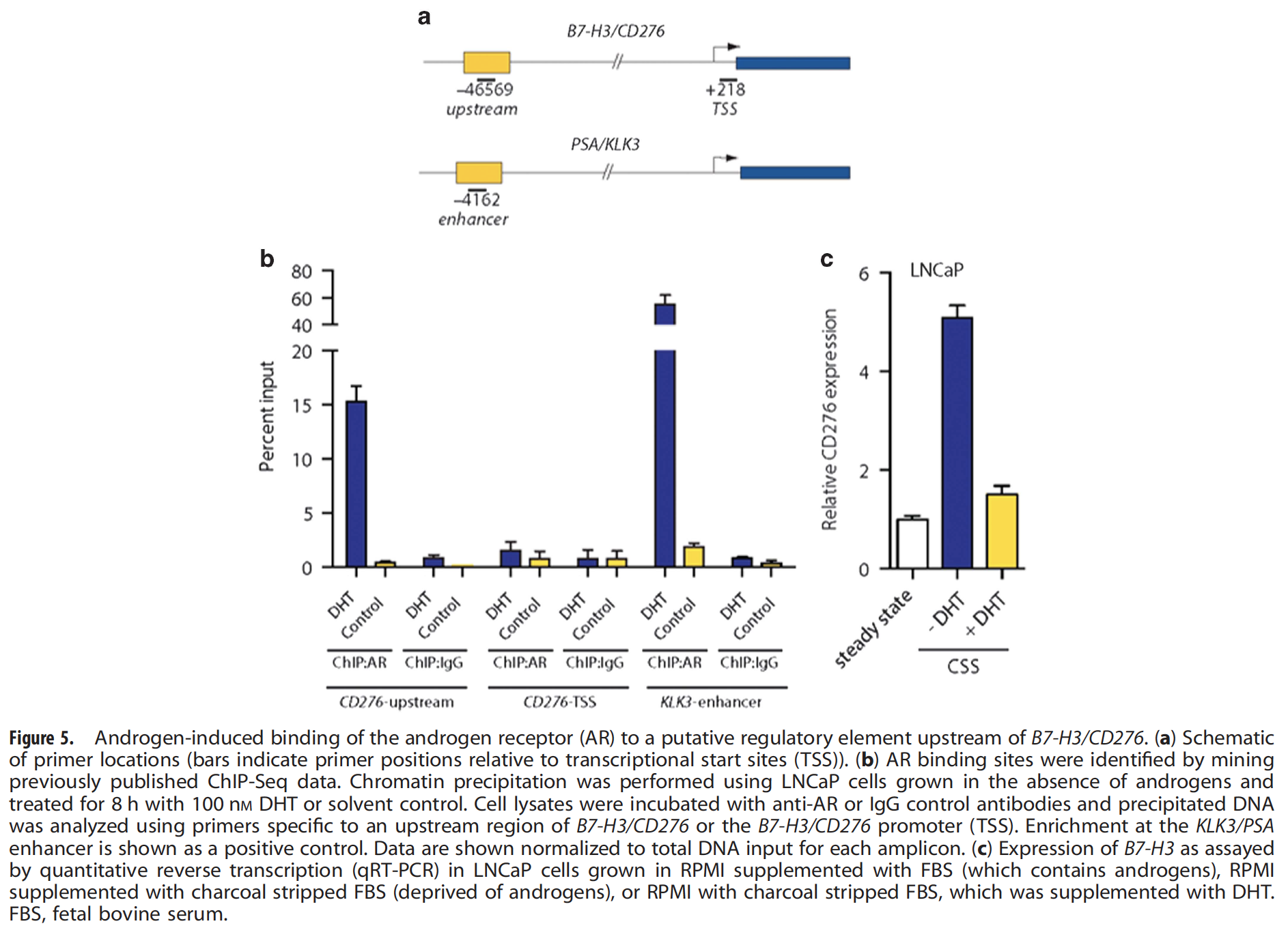 Correlation of B7-H3 with Androgen Receptor, Immune Pathways and