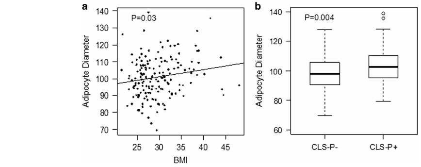 PCAN UroToday Adipocyte diameter BMI and periprostatic WAT inflammation