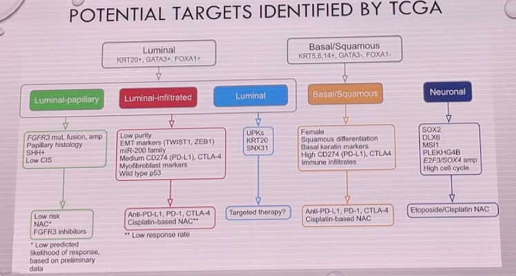 Potential Targets Identified by TCGA