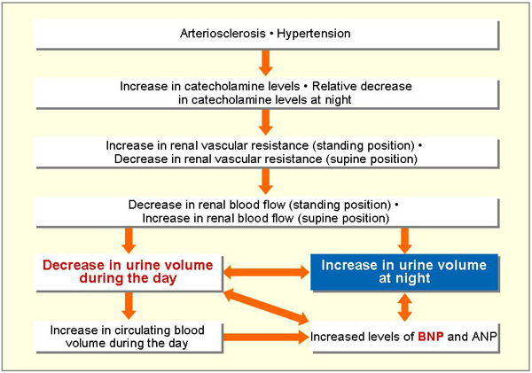 Flowchart showing nocturia's influence on bladder function